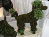 Poodle Topiary